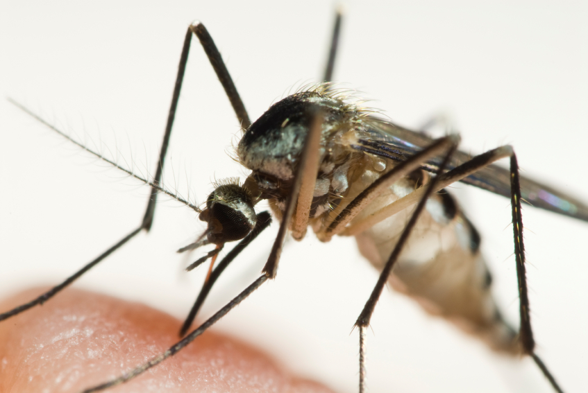 mosquito control Maryland